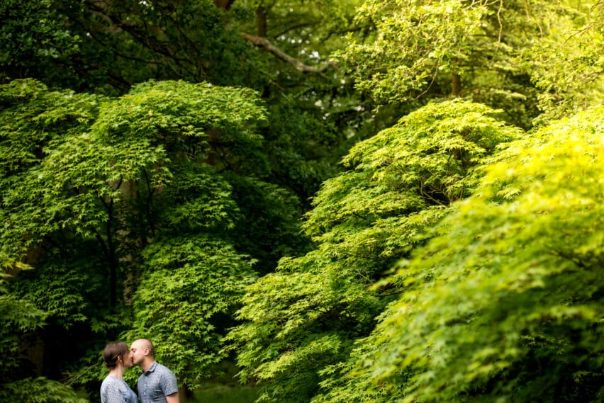couple kissing surrounded by Acer trees