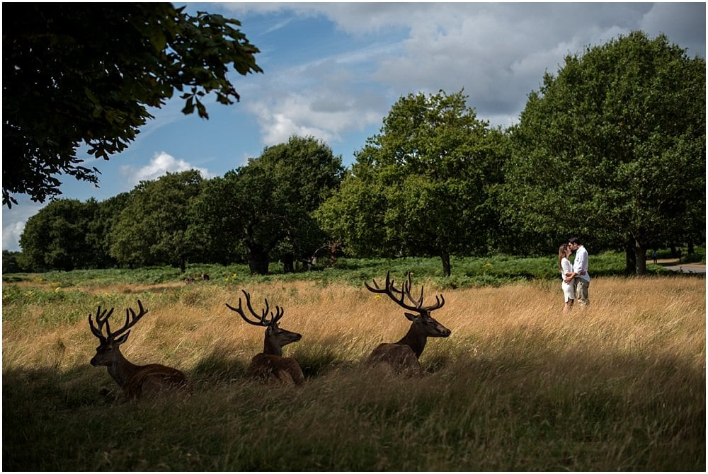 Richmond park Engagement Sessions with deer