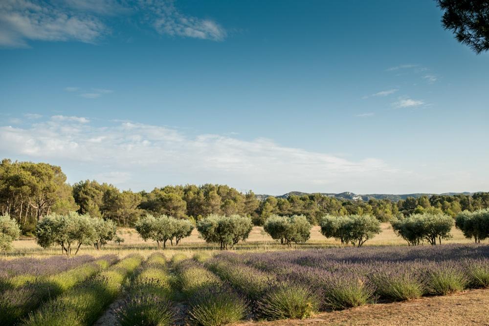 Le Mas de La Rose wedding venue lavender field