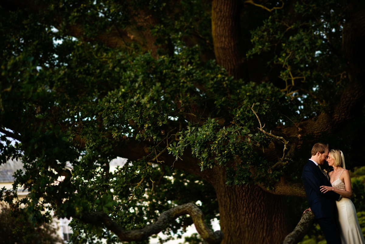 portrait of bride and groom under Oak tree, Suffolk