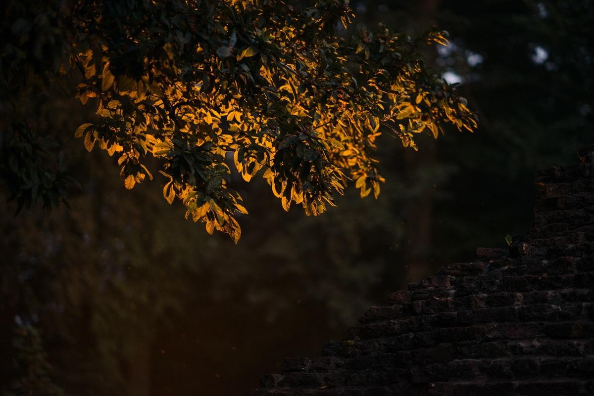 light hitting leaves