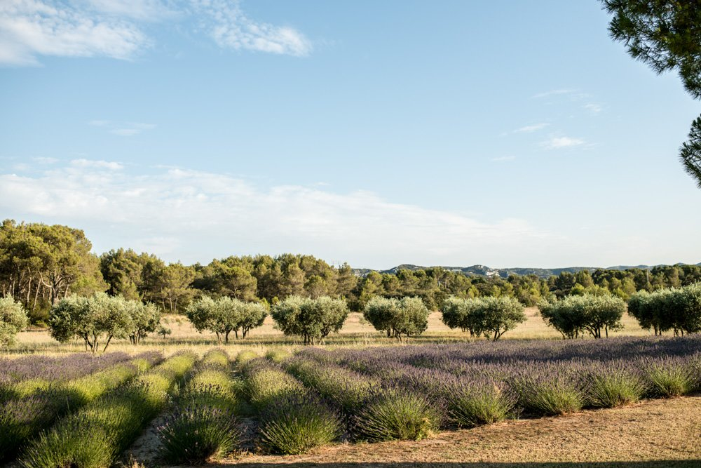 Le Mas de La Rose wedding venue lavender field