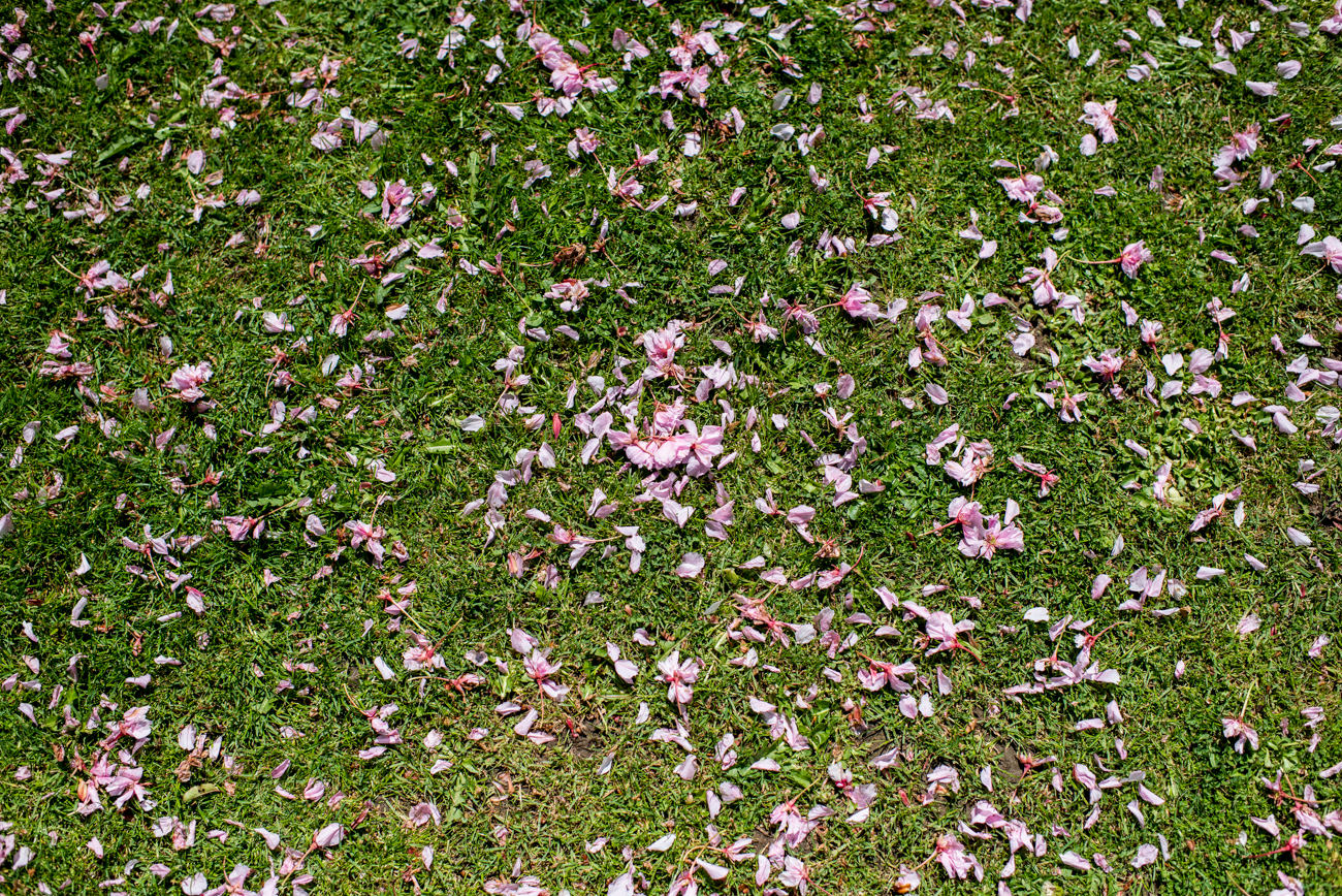 blossom on grass