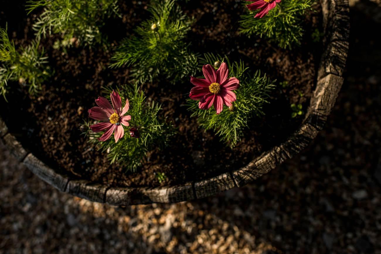 flowers in barrel