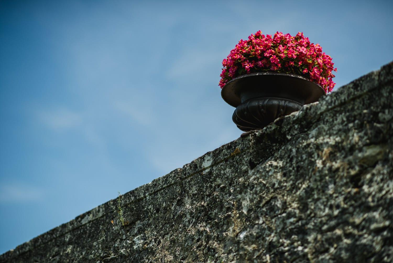 flowers at Chateau de Lacoste France